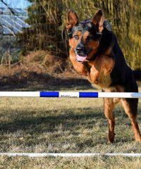 Hamilton Dog Training