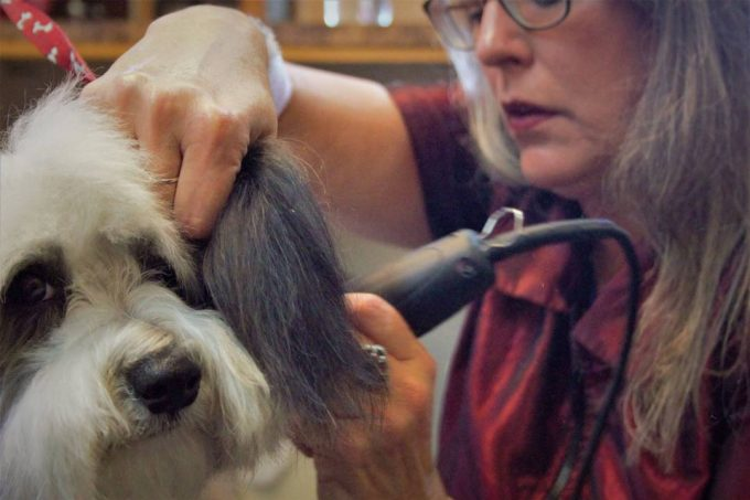 TLC Dog Grooming